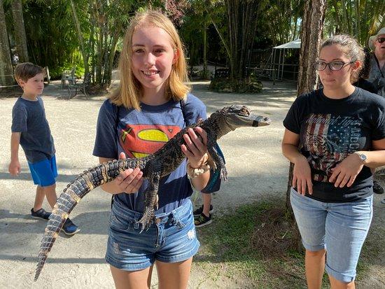 Holding an American Alligator