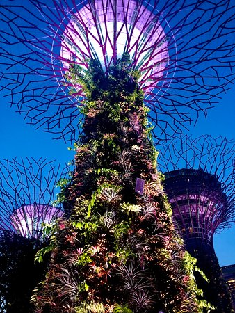 Astounding display @ Gardens By the Bay