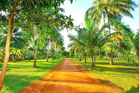 Handun Villas Coconut Harvesting experience