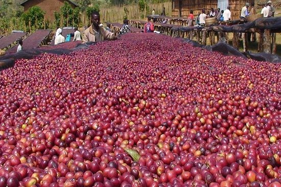 Western and Southern Ethiopian Coffee Tour