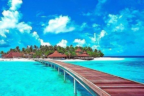 Tour to Johnny Cay, Aquarium, Manta rays, Mangroves, Island tour or...