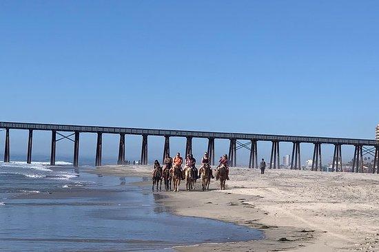 在沙滩和新港上骑马