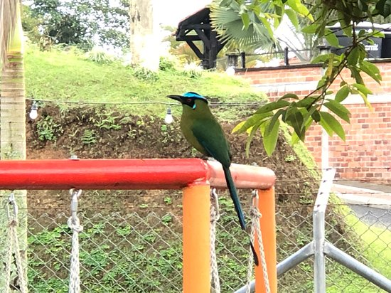 nuestra ave residente