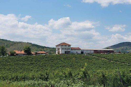 Private Weintour durch das Weingut...