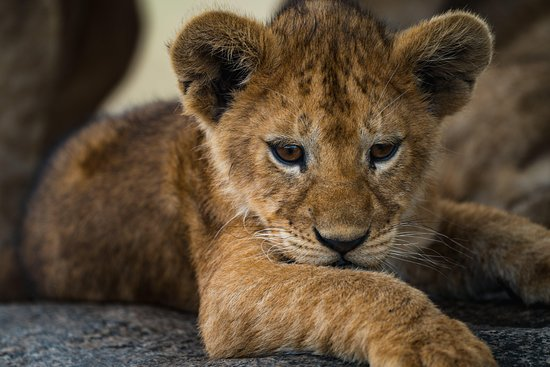 Arusha Trips | Adventurous Tanzania Safari's