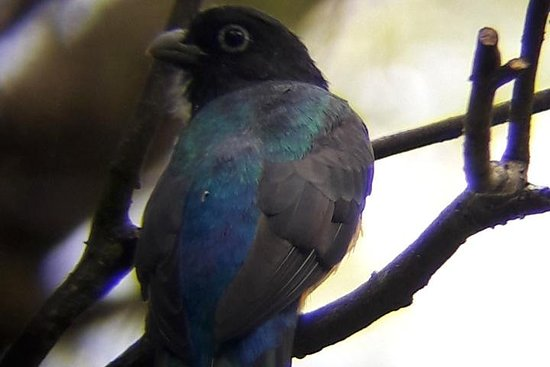 Observation des oiseaux à Montibelli