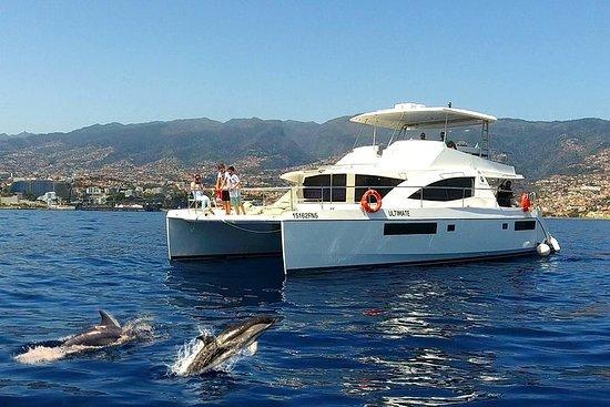 VipDolphins Luxe walvis spotten