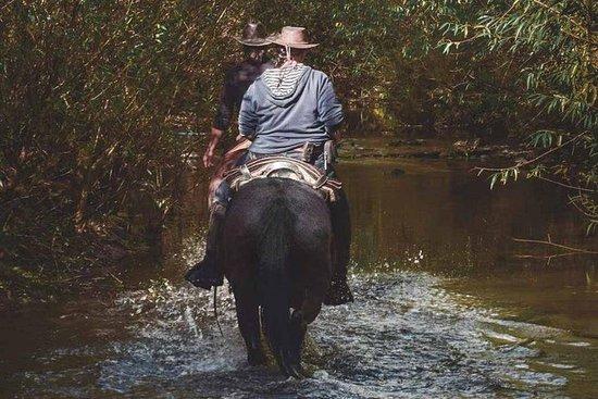 Paardrijden in Pucon