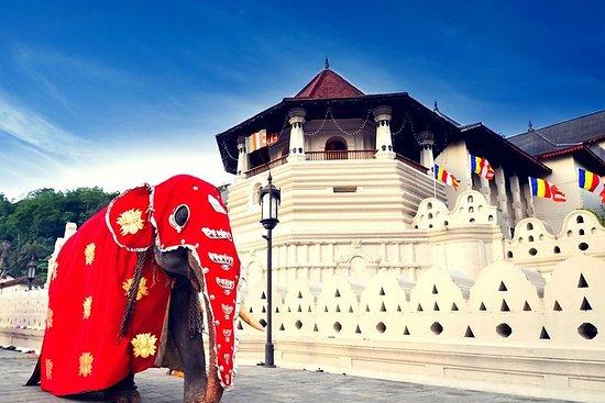 3D 2N Kandy and Sigiriya with Holiday Walkers Sri Lanka – fotografija