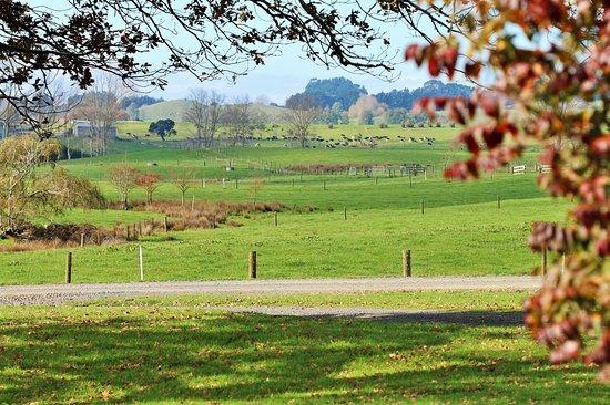 Miranda, Νέα Ζηλανδία: Home