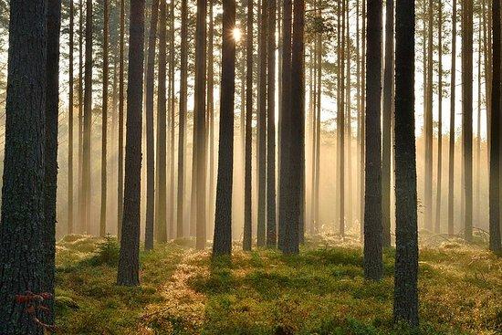 北欧の森散歩とピクニック