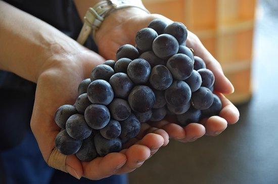 地元産100%のブドウを使いワインをつくっています。