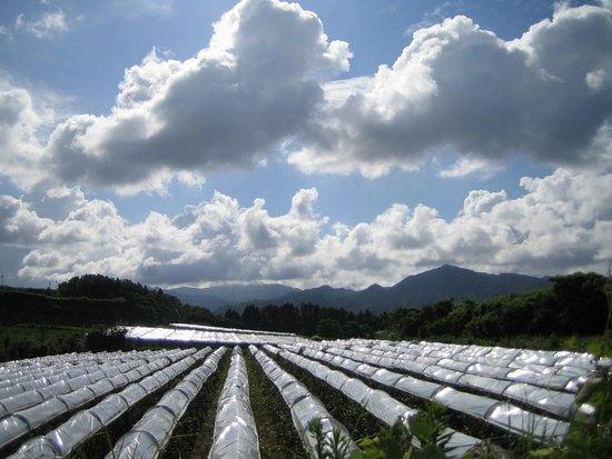 牧内台地に広がる自社畑でシャルドネなどのワイン専用品種を栽培しています。