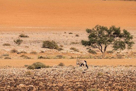 12 dager / 11 netter - Namibia In Plus - Selvkjøring