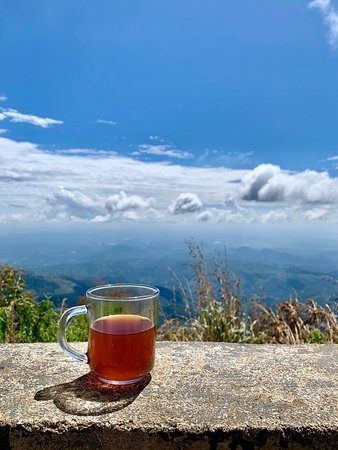 A tea break at Lipton's seat