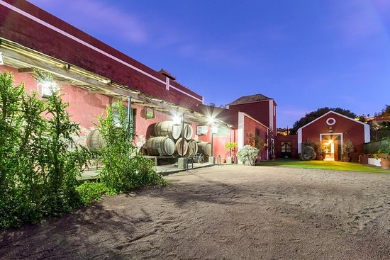Tour guiado por viñedos, museo del...
