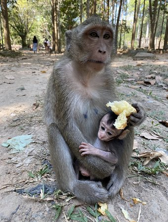 Sunrise at Angkor Wat, Bayon and Ta Prohm Temple Tour: Some monkeys we ran into