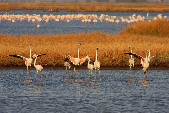 Birdwatching e Tour Fotografico in Diaccia Botrona