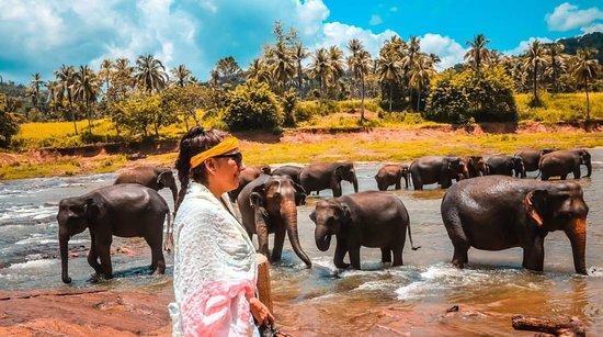 Elephant Orphanage, Pinnawela