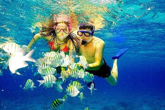 Catalina Island and Snorkeling Tour