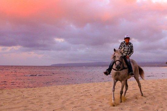 Hawaii Polo Oceanfront Hesteridning