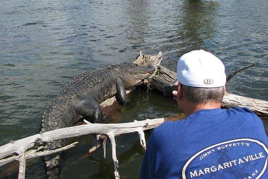 Excursion en bateau sur la nature et la faune en Louisiane