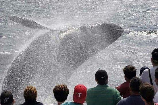 Whale Watching Tour i Gloucester