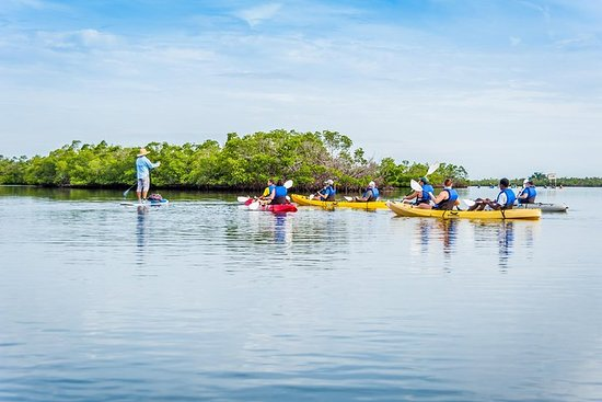 Rookery Bay Reserve Kayak Ecotour in Naples