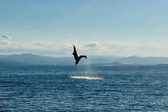 Delfinbeobachtungstour