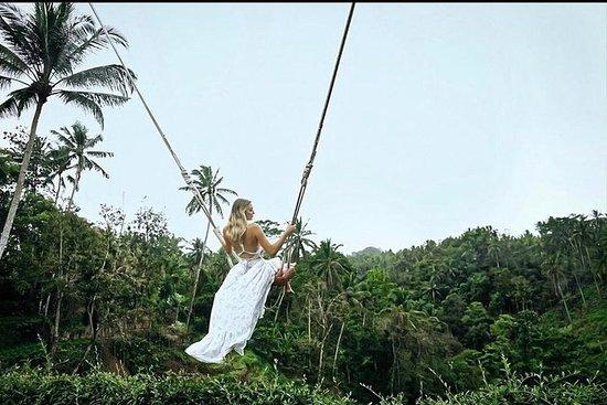 Wi-Fi gratuito - Balanço da selva de...