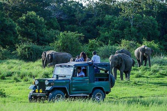 Excursion d'une journée au safari à...