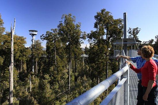 West Coast Tree Top Walk Expérience