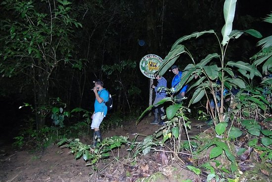 Nativos Corcovado natttur i DrakeBay