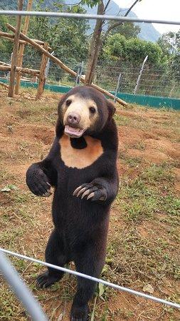 Luang Prabang, Laos: Beautiful Sun bear