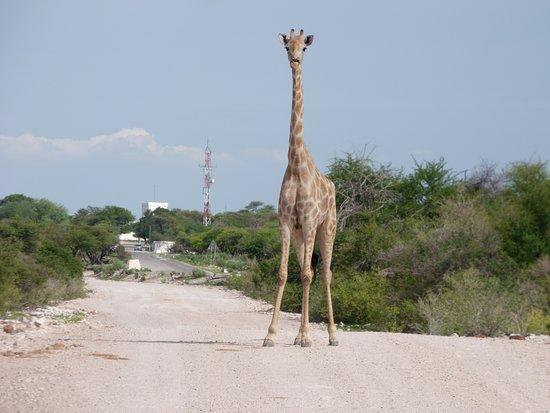 Etosha National Park Day Tour