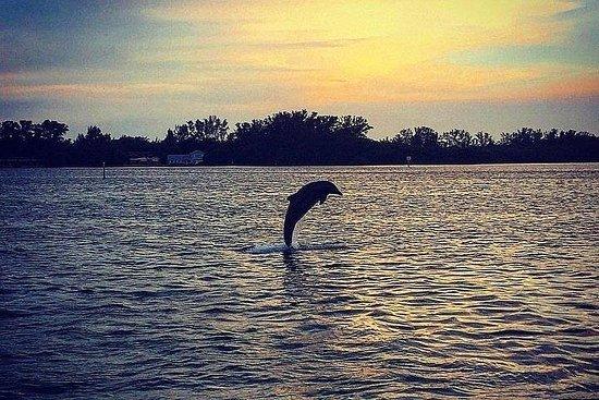 Tour al tramonto dei delfini dell'isola Anna Maria
