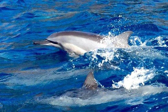 Demi-journée visite des dauphins + tuba au départ de Lahaina