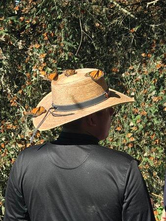 Monarch Butterfly Tour (Partenza da Morelia) Image