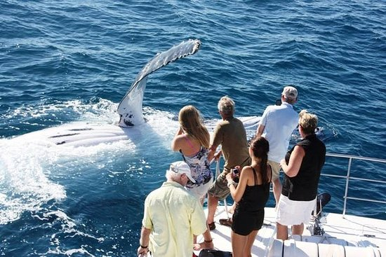 Half-Day Whale Watching Sunset Cruise...