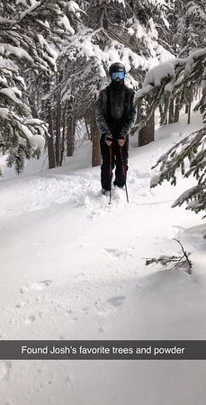 Trees and Powder are easy to find