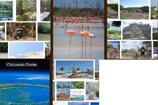Visites guidées dans la région de Progreso (également des visites...