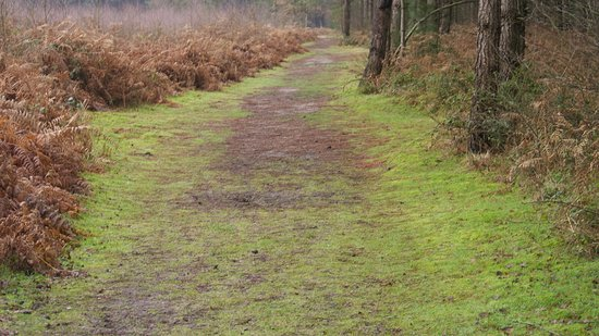 Rendlesham Forest and the UFO walk