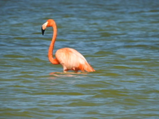 Lake Enriquillo: Flamingo Island