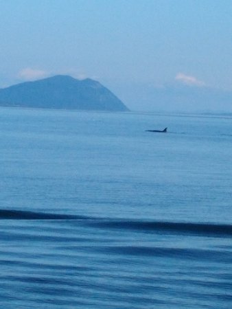 Anacortes Guaranteed Whale Watch Tour: Orca