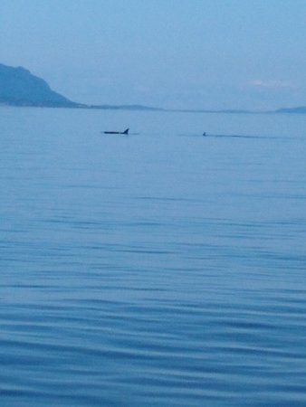 Anacortes Guaranteed Whale Watch Tour: Pod of Orca