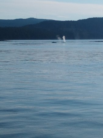 Anacortes Guaranteed Whale Watch Tour: 2 Humpbacks