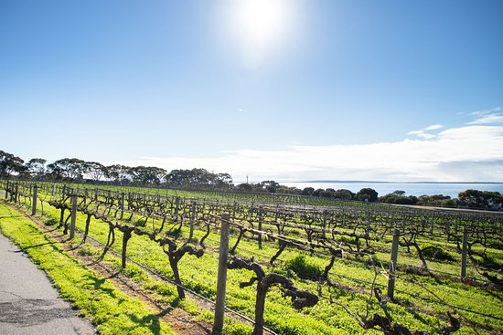 Gorgeous views of the vineyard out over Boston Bay.