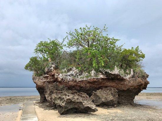 Quirimbas National Park ภาพถ่าย