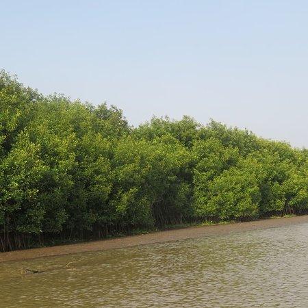 Découverte de l'île aux oiseaux et de mangroves à Grand Popo. #visite guidée #Découverte nature