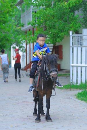 Таш-Дёбё, Киргизия: Милое пони для детей